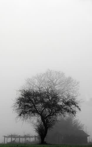 shades of grey……with a hint of green. Foto: yeraze (Creative Commons Licentie)
