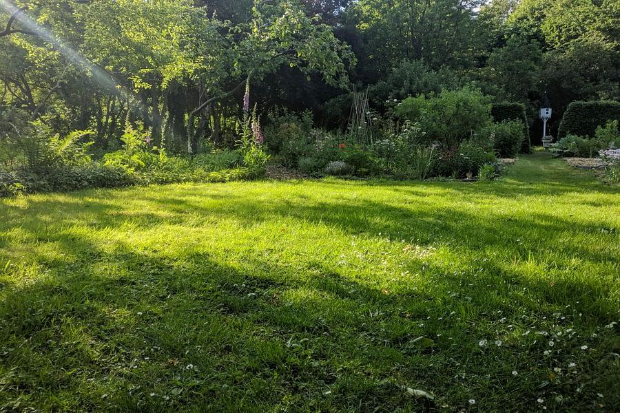 Groen gras in tijden van droogte