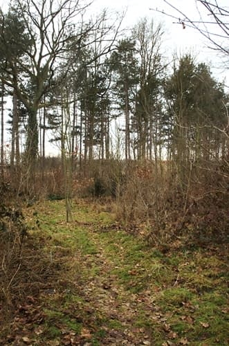bos in wording - woodland to be