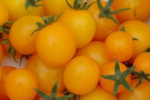 Tomaat 'Gold nugget' Tomatoe