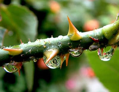 After the rain - Foto: Natascha2007 (Creative Commons license)